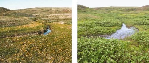 Abb. 4.46 © (links): Unbekannt/Yukon Parks(rechts): Isla Myers-Smith, Team Shrub, University of Edinburgh
