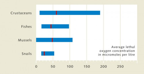 2.13 > Marine animals react in different ways to oxygen deficiency. Many species of snails, for instance, can tolerate lower O₂ levels than fish or crabs. The diagram shows the concentration at which half of the animals die under experimental conditions. The average value is shown as a red line for each animal group. The bars show the full spectrum: some crustaceans can tolerate much lower O₂ concentrations than others. ©maribus (after Vaquer-Sunyer und Duarte, 2008)