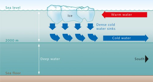 1.6 >  The convection process in the North Atlantic: Cold, salty water sinks in the Labrador and in the Greenland Sea. This water forms a layer above the denser deep water from the Antarctic at a depth of around 2000 metres and flows toward the equator. Warmer waters from the upper ocean layers move into the convection area to replace the sinking water. © maribus