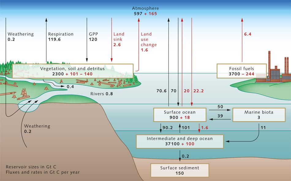 Co U2082 Reservoir  U00ab World Ocean Review