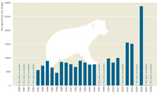 4.8 > PFOS concentrations in the livers of East Greenland polar bears have increased significantly in recent years. The measurements were obtained from deep-frozen liver samples. © maribus (after Dietz et al., 2008)