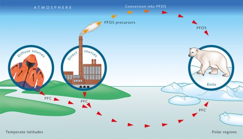 4.9 > PFCs can travel great distances in water or air. Through a direct pathway, they enter the rivers in wastewater and are carried down to the sea. They can also be transported indirectly through the atmosphere. For example, volatile PFOS precursors are released into the atmosphere, where they are converted into PFOS, which is then deposited back on the Earth's surface at the place of origin or elsewhere in rainfall or in dust particles. © maribus