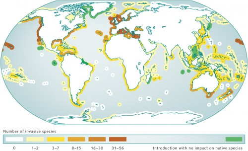 5.9 > Invasive species thrive particularly well in certain coastal ecoregions of the Earth. Most affected are the temperate latitudes. Regions where immigrants do not encroach on or displace native species are shown in green. © maribus (after Molnar et al., 2008)