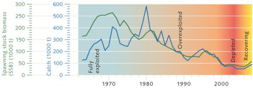 6.1 > The example of North Sea cod shows how a fish stock collapses (i.e. becomes depleted) if there are no longer enough mature fish (spawning stock, green) available to produce offspring. ©maribus (after Quaas, FAO Fishstat)