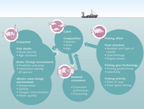 6.10 > Schematic overview of a marine fishery. The white arrows show the route taken by the fish from the sea to the consumer. The dark-green arrows show the impacts of consumer demand and fishing effort on catch volumes and the marine ecosystem. ©maribus (after Quaas)