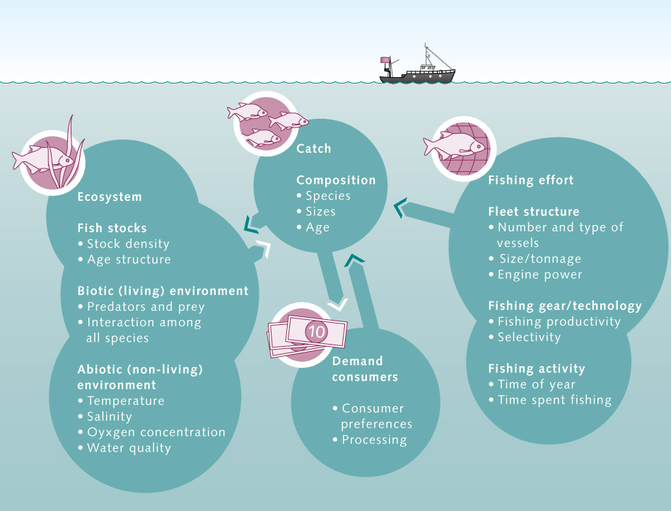 over fishing, problems and solutions essay Impact of overfishing it is very easy to predict the most obvious impact of  overfishing — no more fish for humans and this is only a few decades from now,  if we.