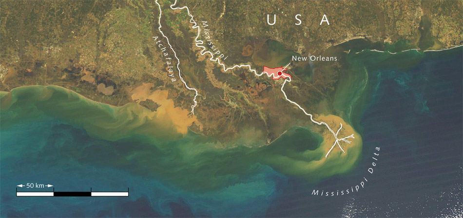 4.5 > The Mississippi River carries vast amounts of sediments (yellow-brown) and nutrients into the Gulf of Mexico, which are then transported westward along the coast by the wind. The nutrients cause a strong growth of algae (green). Oxygen is consumed in the deep water as bacteria break down the algae. This results in a completely oxygen-depleted dead zone along a broad strip of the US coast.