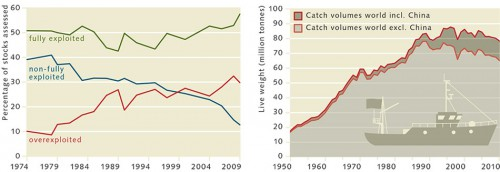 Fig. left: 3.3 > The number of overexploited stocks has soared since the 1970s, while the number of non-fully exploited stocks has decreased. Fully-exploited stocks are not, in principle, problematic. It is important to manage them sustainably, however. Fig. right: 3.4 > The development of catch volumes of world marine capture fisheries since 1950. Catches in China might have been adjusted upwards for many years, in order to comply with the  government's official output targets. © after FAO (2012)