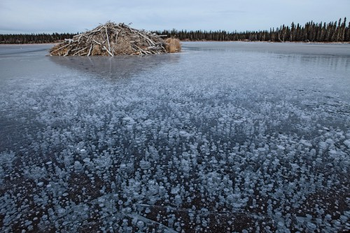 fig. 3.14 >  In freshwater lakes, such as this one near Fairbanks in Alaska, methane bubbles can freeze in ice. © National Geographic Image Collection / Alamy