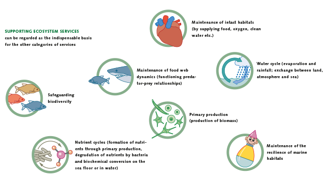 an overview of our ocean environment In 2006 the pew charitable trusts and several partners launched the global  ocean legacy project in an effort to establish the world's first generation of great .