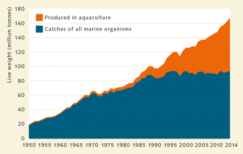 fig. 2.12: The quantities of fish and seafood produced today are many times greater than they were in 1950. While aquaculture was insignificant at first, it now provides almost half of the global production. © after FAO
