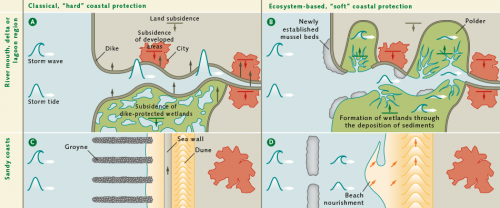 fig. 4.22: While dikes or other man-made structures based on classical coastal defence concepts have to be raised to keep pace with climate change, ecosystem-based coastal protection utilizes the full natural potential of the coastal environment. Instead of setting forced limits on the water with increasingly higher dikes (A), polders can be built in estuarine areas to make more room for the sea (B). Instead of defence by groynes and sea walls (C), sandy coasts can be protected in the future through the creation of depots by artificial filling (D), which can provide the coastal areas with sand over several decades. © nach Temmermann