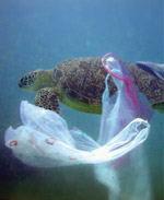 litters reported at sea About 70 percent of all litter in the sea is plastic, and it does not decompose  however, according to the report, the challenges the sea is facing will have major implications for global.