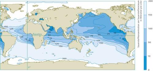 2.15 > Meeresgebiete mit Sauerstoffmangel sind durchaus natürlich. Diese Zonen befinden sich vor allem in den mittleren Breiten an den Westseiten der Kontinente. Hier durchmischt sich das warme Oberflächenwasser kaum mit dem kalten Tiefenwasser, sodass nur wenig Sauerstoff in die Tiefe dringt. Zudem führen hier eine hohe Bioproduktivität und entsprechend große Mengen absinkender Biomasse zu starker Sauerstoffzehrung in der Tiefe – insbesondere zwischen 100 und 1000 Metern.  ©maribus (nach Keeling et al., 2010)