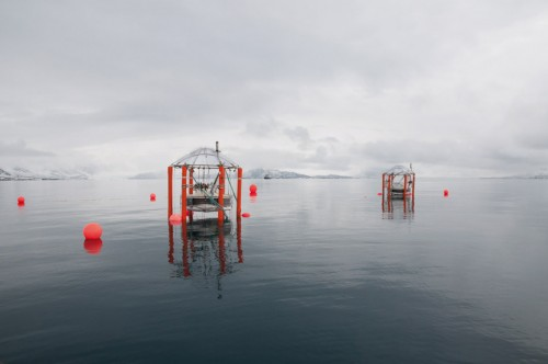 2.5 > In order to determine the effect of increasing atmospheric CO₂ concentrations on the ocean, an international research team enriched seawater with CO₂ in floating tanks off Spitsbergen, and studied the effects on organisms. © Nicolai, IFM-GEOMAR