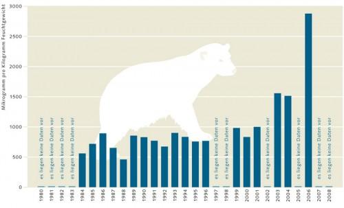4.8 > In den vergangenen Jahren haben die PFOS-Konzentrationen in den Lebern ostgrönländischer Eisbären deutlich zugenommen. Die Messwerte wurden aus tiefgefrorenen Leberproben gewonnen. ©maribus (nach Dietz et al., 2008)