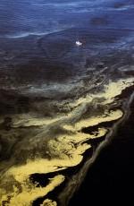 4.3 > Wenn die Bedingungen für das Phytoplankton günstig sind, treten in den Meeren immer wieder Algenblüten auf, beispielsweise in der Ostsee. Durch die Massenvermehrung von Cyanobakterien, vormals als Blaualgen bezeichnet, verfärbt sich das Wasser in diesen Gebieten grün. Solche Phänome sind durchaus natürlich, doch gibt es solche Blüten aufgrund der Überdüngung heute ungewöhnlich häufig. ©Andre Maslennikov/Still Pictures