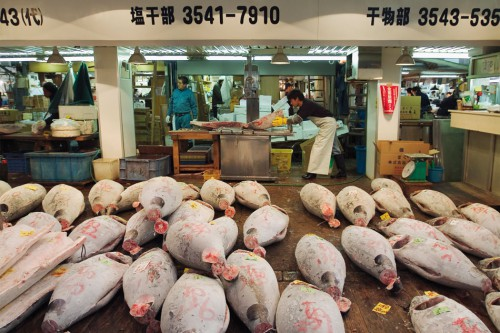 6.12 > Deep-frozen tuna for sale at a Tokyo fish market. Japan is the fifth-largest fishing nation in the world. © Pierre Tremblay/Masterfile