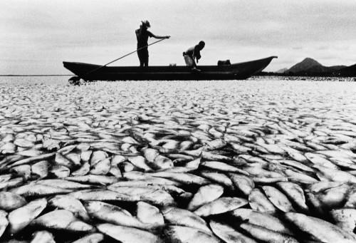 6.15 > Das Dynamitfischen ist fast überall verboten, weil durch die Explosion unzählige Tiere verenden. In Gebieten, die von Behörden kaum kontrolliert werden, praktizieren Fischer diese radikale Fangmethode dennoch – so wie hier in Brasilien. ©M. Tristao/UNEP/Still Pictures/OKAPIA