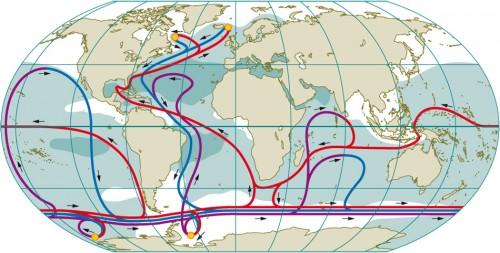 1.8 > Die weltweiten ozeanischen Strömungen der thermohalinen Zirkulation sind ausgesprochen komplex. Nur im Atlantik erkennt man deutlich, wie kaltes salzreiches Oberflächenwasser (blau) in der Tiefe gen Äquator strömt. Warmes Oberflächenwasser (rot) strömt in der Gegenrichtung polwärts. Nicht überall sind die Strömungsverhältnisse so deutlich wie im Golfstromsystem (zwischen Nordamerika und Europa). So fließt etwa um die Antarktis der sogenannte Zirkumpolarstrom in der gesamten Wassersäule. Die kleinen gelben Kreise in den Polarregionen zeigen Konvektionsgebiete. Die dunklen Gebiete sind durch hohen Salzgehalt gekennzeichnet, die weißen durch niedrigen. Salzige Wassermassen findet man, abgesehen von den Konvektionsgebieten, vor allem in den warmen Subtropen, da hier die Verdunstung besonders stark ist. ©maribus (nach Meincke et al., 2003)