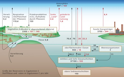2.1 > Der globale Kohlenstoffkreislauf der 1990er Jahre mit dem Kohlenstoffinhalt der verschiedenen Speicher (in Gigatonnen Kohlenstoff GtC) sowie den jährlichen Austauschflüssen zwischen diesen. Vorindustrielle natürliche Flüsse sind in Schwarz, anthropogene Änderungen in Rot angegeben. Der Verlust von 140 GtC in der terrestrischen Biosphäre entspricht den kumulativen CO₂-Emissionen, die sich aus der geänderten Landnutzung (überwiegend Brandrodung in tropischen Regenwäldern) ergeben und zu den Emissionen von 244GtC aus der Verbrennung fossiler Brennstoffe hinzugerechnet werden. Die terrestrische Senke für anthropogenes CO₂ in Höhe von 101GtC ist nicht direkt nachgewiesen, sondern ergibt sich aus der Differenz zwischen kumulativen Emissionen (244+140=384GtC) auf der einen sowie atmosphärischem Anstieg (165GtC) und ozeanischer Senke (100+18=118GtC) auf der anderen Seite. ©maribus (nach IPCC, 2007)