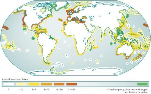 5.9 > In bestimmten Küsten-Ökoregionen der Erde machen sich invasive Arten besonders häufig breit. Betroffen sind vor allem die gemäßigten Breiten. Regionen, in denen Einwanderer heimische Arten nicht beeinträchtigen  oder verdrängen, sind  grün markiert. ©maribus (nach Molnar et al., 2008)