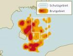 6.16 > Zur Rettung des Dorsches wurden in den tiefen Becken der Ostsee Schutzgebiete eingerichtet (rot). Im Fall des Bornholmer Beckens (BB) aber zeigte sich, dass die Dorschbrut (Ausschnitt, orange-rot) die höchste Überlebensrate außerhalb des Schutzgebiets aufweist. Abb.6.16: ©maribus (nach Rudi Voss/Bastian Huwer, DTU-Aqua)