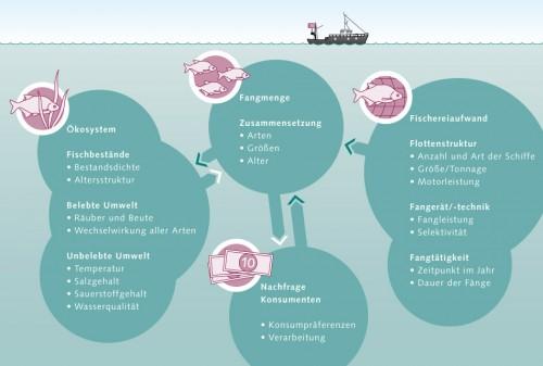 6.10 > Schema einer Meeresfischerei.  Die weißen Pfeile  stehen für den tatsächlichen Weg vom Fisch aus dem Meer zum Konsumenten. Die dunkelgrünen Pfeile stellen die Wirkungen der Konsumentennachfrage und des Fischereiaufwands auf die Fangmenge und das Meeres-Ökosystem dar. ©maribus (nach Quaas)