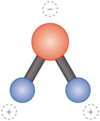 1.7 >  The water molecule is asymmetrical and is therefore oppositely charged at its two ends (left). This is called a dipole. It thus behaves differently from other substances in many ways. Ice is less dense (top) and floats on the surface. Freshwater has its greatest density at four degrees (bottom), and sinks to the bottom. This is then overlain by warm water (middle). Salty water has different characteristics.