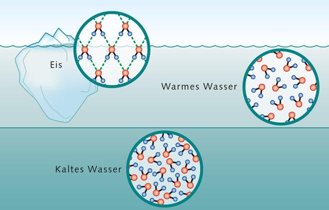 1.7 > Das Wassermolekül ist asymmetrisch und weist daher auf seinen beiden Seiten unterschiedliche Ladungen auf (links). Man spricht von einem Dipol. Dadurch verhält es sich anders als andere Substanzen. Eis ist weniger dicht (oben) und schwimmt an der Oberfläche. 4 Grad kaltes Süßwasser ist am dichtesten (unten) und sinkt in die Tiefe. Warmes Wasser schichtet sich darüber ein (Mitte).