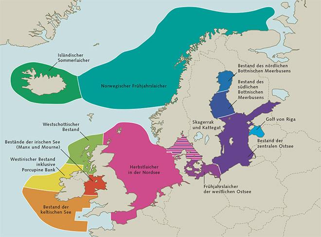 1.6 > Der Hering lebt im Übergangsgebiet zwischen nördlicher gemäßigter und polarer Zone. Er kommt nicht nur in der Nord- und Ostsee, sondern im gesamten Nordatlantik vor und lebt in einer Wassertiefe von bis zu 360 Metern. Heringe unternehmen ausgedehnte Wanderungen zwischen ihren Nahrungs- und Laichgründen und ihren Überwinterungsplätzen.