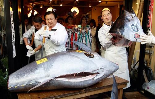 1.14 > Dieser 268 Kilogramm schwere Rote Thun erzielte bei einer Fischauktion in Tokio im Januar 2012 einen Preis von 566000 Euro. Ersteigert wurde er von Kiyoshi Kimura (links), Präsident einer Sushi-Gastronomiekette. Anfang 2013 erwarb Kimura sogar einen Thun für gut 1,3 Millionen Euro. Das entspricht einem Kilogrammpreis von über 6000 Euro. © Shizuo Kambayashi/AP Photo/ddp images