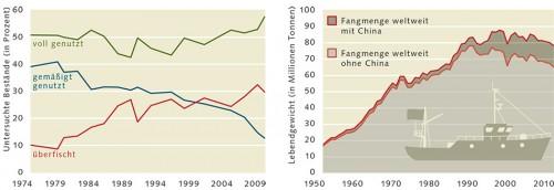 Abb. links: 3.3 > Die Zahl der überfischten Bestände ist seit den 1970er Jahren stark gestiegen, die der gemäßigt genutzten gesunken. Dass Bestände voll genutzt werden, ist nicht grundsätzlich problematisch. Wichtig ist, sie nachhaltig zu bewirtschaften. Abb. rechts: 3.4 > Entwicklung der Fangmengen aller marinen Meereslebewesen seit 1950 weltweit. Die chinesischen Daten sind unsicher und vermutlich zu hoch und werden deshalb separat aufgeführt. © nach FAO (2012)