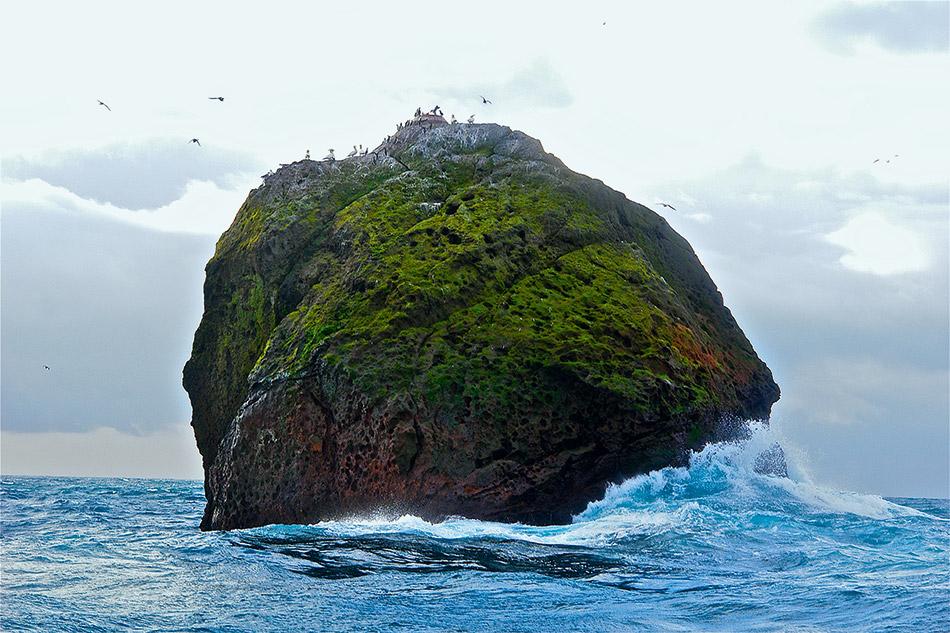 Deep sea fishing world ocean review for Felsen flooring reviews