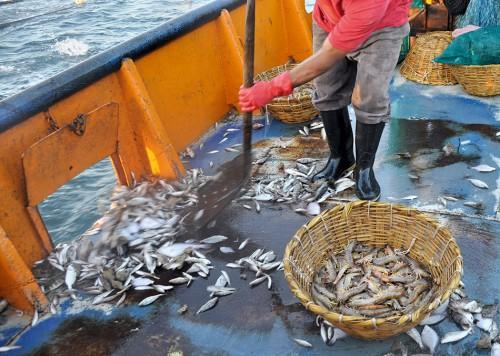 5.20 > Der Rückwurf von Beifang ist nicht nur in der EU, sondern weltweit ein Problem. Dieser mexikanische Garnelenfischer schippt für ihn wertlose Fische über Bord. © Naomi Blinick/Marine Photobank