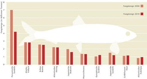 3.9 > Die 10 bedeutendsten Fischarten der Meeresfischerei und ihre weltweiten Gesamtfangmengen. In Abhängigkeit vom Klimaphänomen El Niño schwankt insbesondere die Fangmenge der Peruanischen Sardelle von Jahr zu Jahr.  © nach FAO Fishstat (2012)