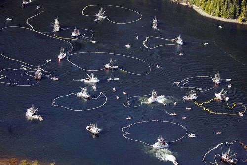 5.12 > Die heiße Schlacht um den Fisch: Im Sitka-Sund in Alaska darf nur einmal im Jahr für wenige Stunden Hering gefischt werden. Dutzende von Booten fischen dann um die Wette. © Klas Stolpe/AP Photos/ddp images