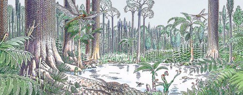 fig. 1.15 > 300 million years ago extensive clubmoss and horsetail forests were common. The plants were several metres high, much taller than today. Coal and natural gas were formed from them. © Jürgen Willbarth