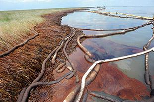 Abb. 1.36 > Trotz solcher Barrieren schwappte Öl an die Küste von Louisiana. © picture alliance/dpa Erik S. Lesse