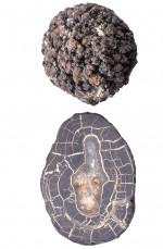 Abb. 2.10 > Schnitt durch eine Manganknolle:  In Jahrmillionen lagern sich Mineralien an einem Keim an. © Charles D. Winters/NatureSource/Agentur Focus