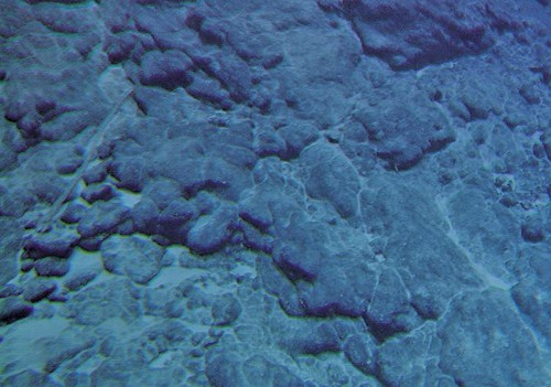 Abb. 2.22 > Unscheinbar, aber ausgesprochen attraktiv für Bergbau- und Metallkonzerne: Kobaltkrusten am Meeresboden. © Jamstec