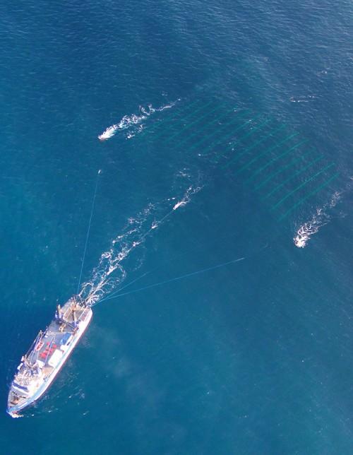 Abb. 3.11 > Bei der 3-D-Seismik werden mehrere parallele Streamerketten hinter dem Schiff hergezogen. Da die Empfänger jeweils leicht versetzt aus unterschiedlichen Winkeln Signale vom Meeresboden empfangen, ergibt sich insgesamt ein räumliches Bild des Bodens. © Geometrics/Craig Lippus/VP Seismic Division