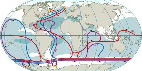 fig. 2.13: The global currents that flow around the world are complex and connect all the oceans. The diagram shows the thermohaline overturning circulation in simplified form. The yellow circles represent the most important areas where water sinks to a great depth. The purple and blue lines radiating from them mark the paths of the surface and deep-water currents. On their way through the ocean, these currents are mixed and warmed until they finally rise upwards. The paths of the warm return flows, which are close to the surface, are shown in red. Surface salt content is higher in the dark areas and lower in the white areas. Since the Atlantic is more saline than the Pacific on average, deep water can form there more easily. The circumpolar current shows that all oceans are interconnected. © after Meincke et al.
