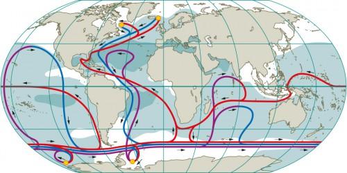 Abb. 2.13: Die weltumspannenden Strömungen sind komplex und verbinden alle Ozeane. Die thermohaline Umwälzbewegung ist in der Grafik vereinfacht dargestellt. Die gelben Kreise stellen die wichtigsten Gebiete dar, in denen Wasser in die Tiefe absinkt. Die lila und blauen Linien, die von dort ausgehen, markieren die Pfade der Boden- und Tiefenströmungen. Auf ihrem Weg durch den Ozean werden diese Strömungen vermischt und erwärmt, bis sie schließlich aufsteigen. Die Pfade der warmen oberflächennahen Rückströmungen sind rot gezeichnet. Dunkle Gebiete weisen einen höheren, weiße Gebiete einen niedrigeren Oberflächensalzgehalt auf. Da der Atlantik im Durchschnitt salziger als der Pazifik ist, kann sich hier Tiefenwasser leichter bilden. Der Zirkumpolarstrom zeigt, dass alle Ozeane miteinander verbunden sind. © nach Meincke et al.