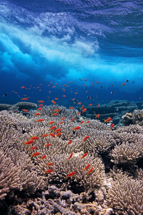 fig. 2.20: Coral reefs, such as the one pictured here in the Red Sea off Egypt, are of major significance due to their species diversity. Coral reefs worldwide host somewhere between one and three million different species. However, today these ecosystems face multiple threats. ©Georgette Douwma/nature picture library