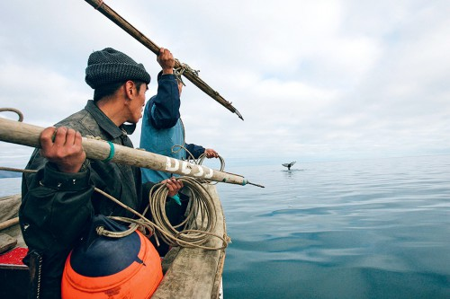 fig. 4.9: For the men of the Chukchi people in northeast Russia, hunting gray whales is an age-old tradition. They use the meat to feed themselves and, above all, their sled dogs. © PhotoXPress/Visum