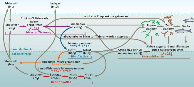 Abb. 2.10: Stickstoff ist das häufigste Element in der Erdatmosphäre und ein wichtiger Pflanzennährstoff. Stickstoff wird in der Natur in einer Art Kreislauf durch Bakterien und Pflanzen immer wieder chemisch umgewandelt. © maribus