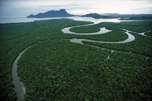 Abb. 2.11: Das Mündungsgebiet des Flusses Salak auf der Insel Borneo wird  von Mangroven dominiert. Sie schützen die Küste vor Orkanen und Sturmfluten. © Timothy Laman/Getty Images