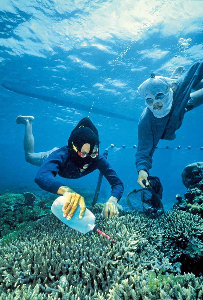 Abb. 2.41: Bei der Zyanidfischerei wird Gift ins Wasser gegeben, das die Fische bewegungsunfähig macht. Einmal eingesammelt, kann der Fisch später lebend verkauft werden. © H. Hall/SeaTops.com