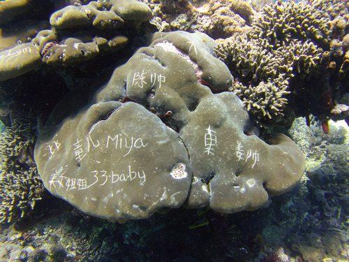 Abb. 2.49: Intensiver Tourismus kann Korallenriffe stark beschädigen – beispielweise wenn Urlauber Meeresorganismen ritzen. © OK Divers, Padangbai, Bali